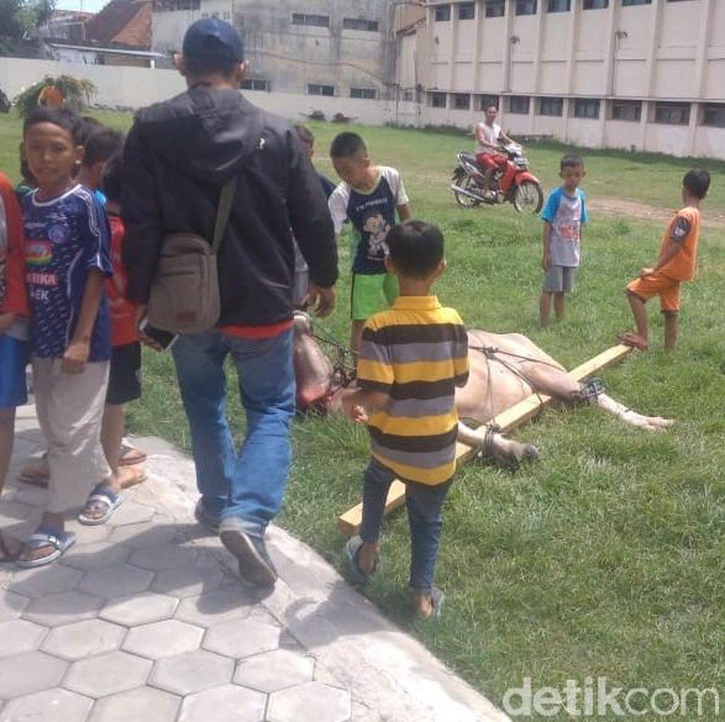 Ngamuk dan Seruduk Anak, Kerbau di Kudus Ditembak