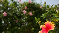 Pemandangan yang indah terbukti dapat jadi resep untuk melawan stres. Nah di Thailand ada taman bunga yang dibuat khusus untuk para pengagum hal-hal erotis.