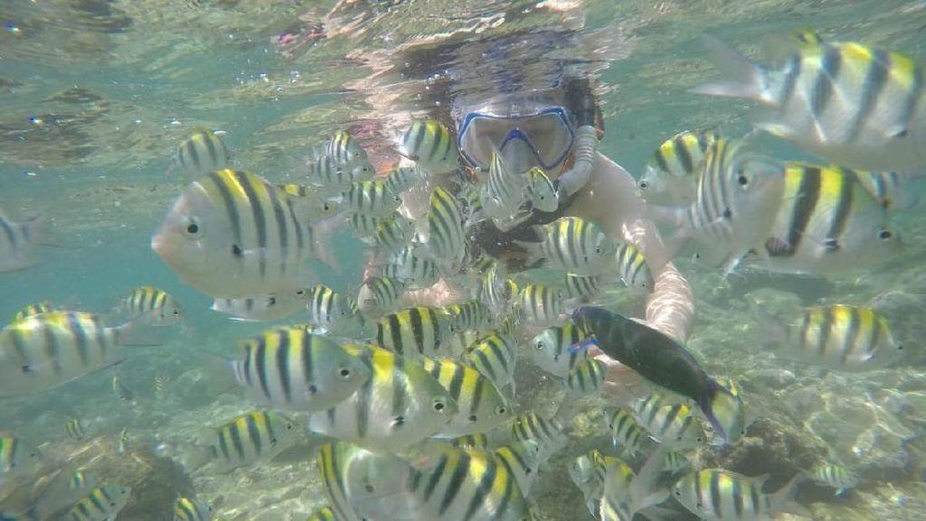 Liburan Akhir Tahun di Gunungkidul, Ayo Snorkeling di Pantai Nglambor!