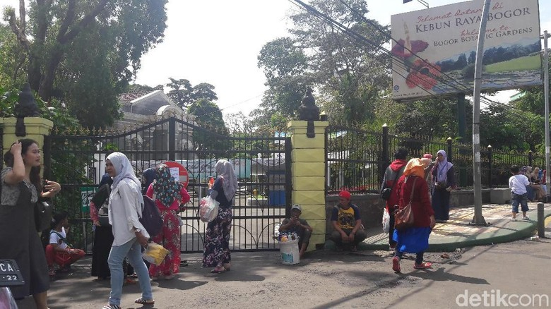 Suasana Kebun Raya Bogor pasca cuaca buruk (Farhan/detikTravel)