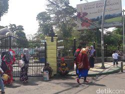 Angin Kencang Landa Bogor, Kebun Raya Bogor Ditutup Sementara