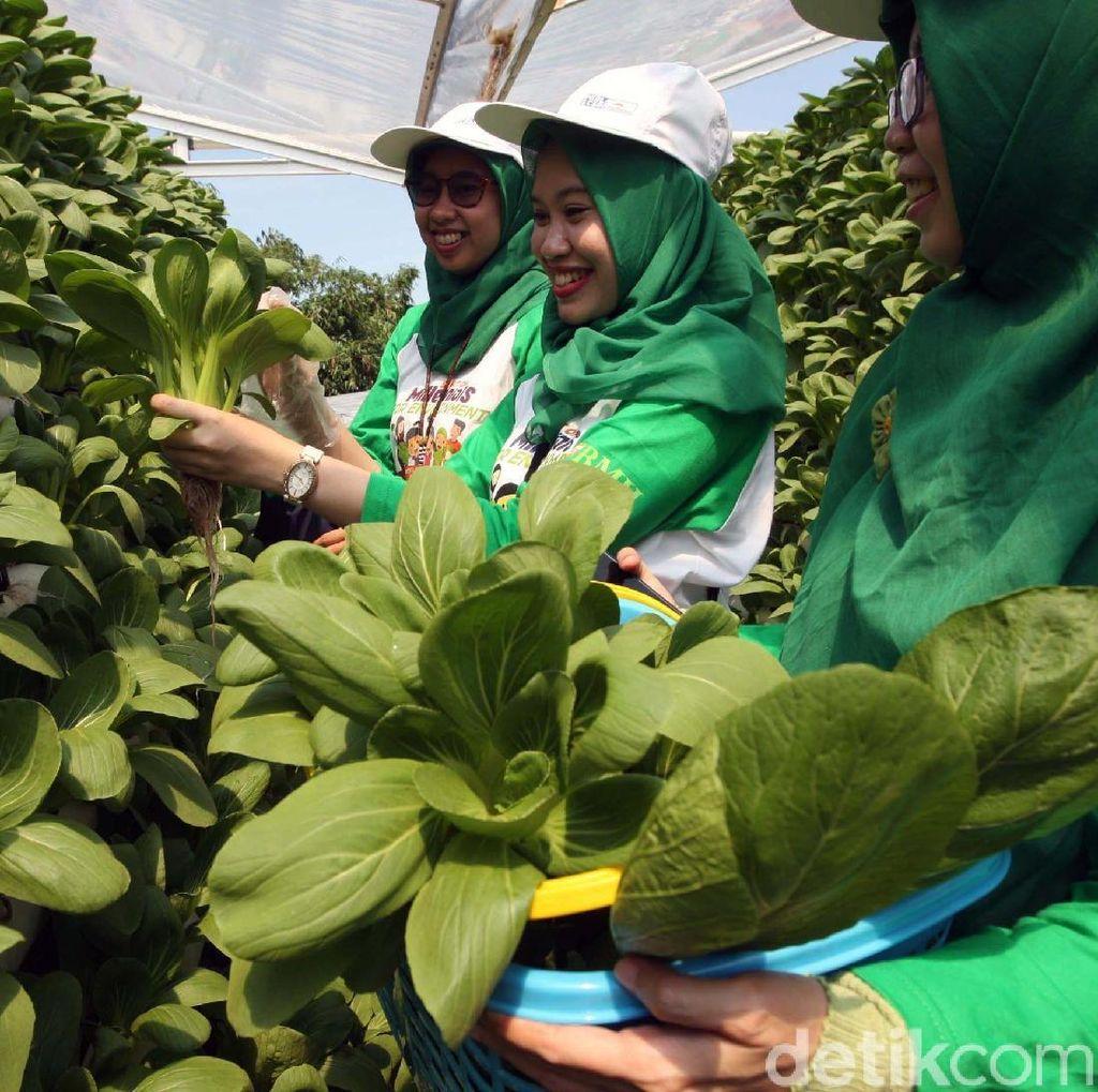 Melihat Kebun Gizi Hidroponik di Ponpes Hidayatullah