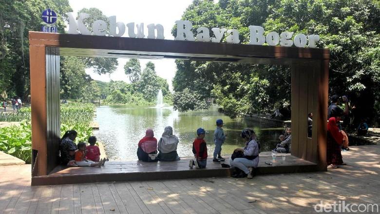 Jalan-jalan ke Kebun Raya Bogor, Apa Saja yang Menarik?/Foto: Lamhot Aritonang