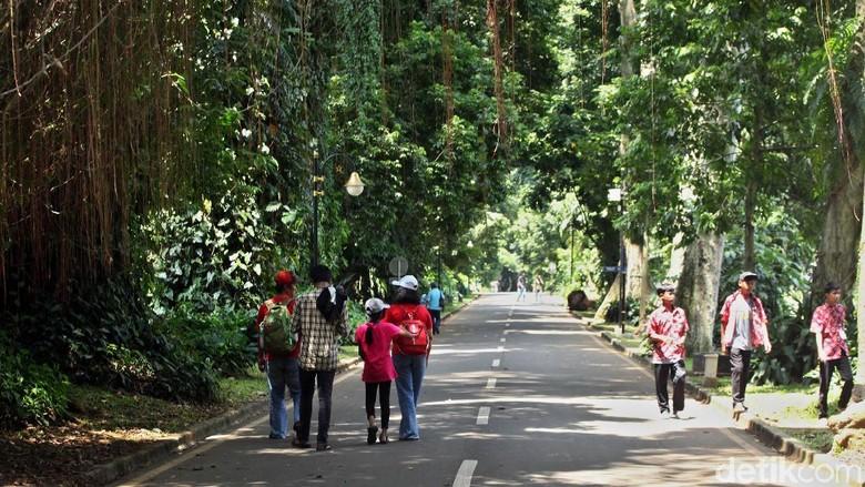 Angin kencang yang melanda wilayah Bogor membuat banyak pohon di Kebun Raya Bogor ditutup sementara. Namun, kini tempat wisata itu kembali dibuka untuk umum.