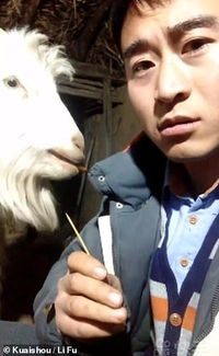 Bukan Rumput, Kambing Asal China Ini Doyan Curi Makanan Manusia