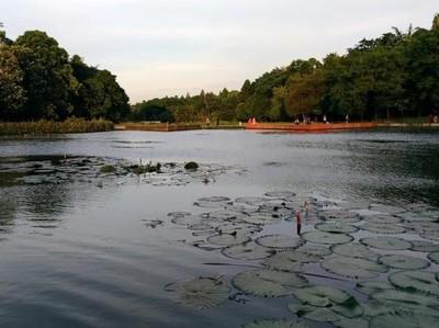 Ada Danau Dora di Kawasan LIPI Cibinong, Sudah Tahu?