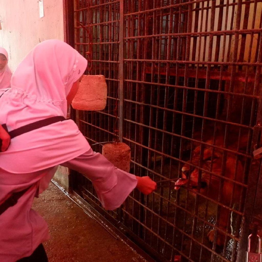 Ngeri-ngeri Sedap, Wisata Beri Makan Harimau di Banjarnegara