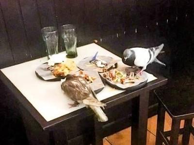 Teror Ribuan Burung Merpati di Spanyol