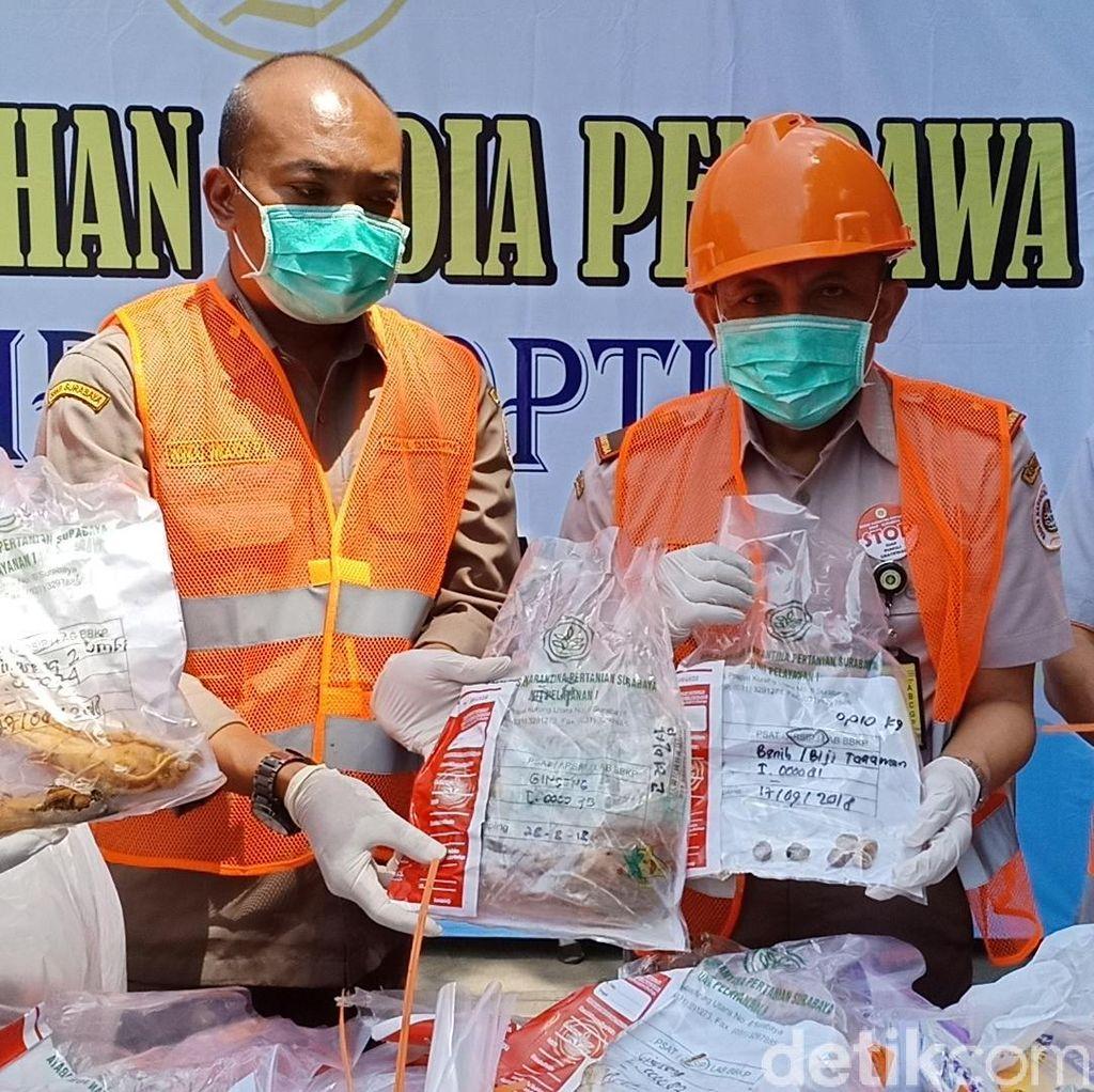Paket Bibit Tanaman Tak Berizin Dimusnahkan Balai Karantina Kediri