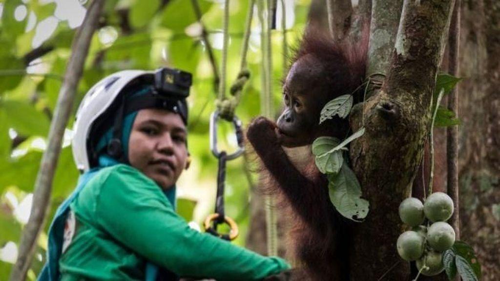 Masih Ada Harapan Bagi Masa Depan Orangutan di Kalimantan