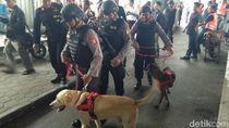 Selama Libur Akhir Tahun, Anjing Pelacak Disiagakan di Stasiun Yogya