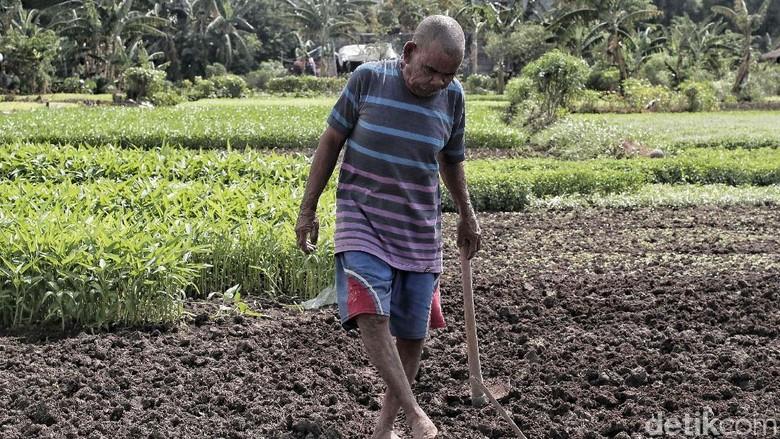 Momentum Deklarasi Hak Petani di Indonesia