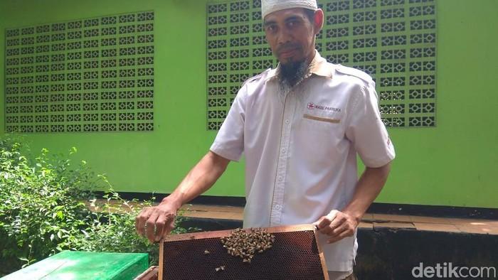 Syarat dan efek samping terapi sengat lebah. Foto: Aisyah/detikHealth