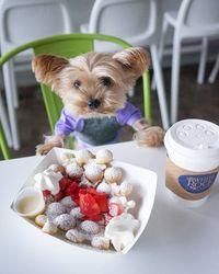 Bikin Gemes! 5 Anjing 'Foodie' Ini Pamer Pose Cute Saat Makan