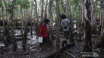 Sensasi Kemah dan Berburu di Tanah Datar, TN Wasur
