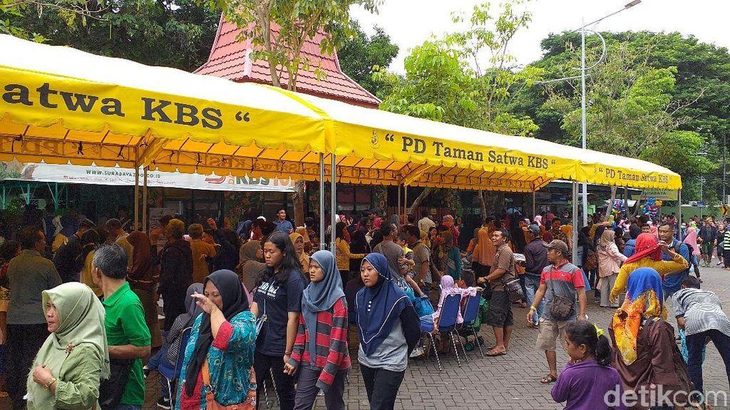 Liburan Sekolah Hari Kedua, Pengunjung KBS Lebih dari 30 Ribu