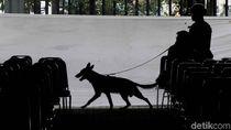 Kawanan Anjing Pelacak Tarik Perhatian Peserta CFD
