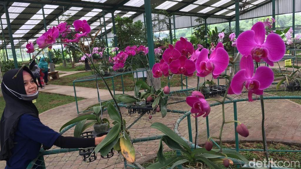 Liburan Akhir Tahun Murah di Mojokerto: Lihat Kebun Anggrek