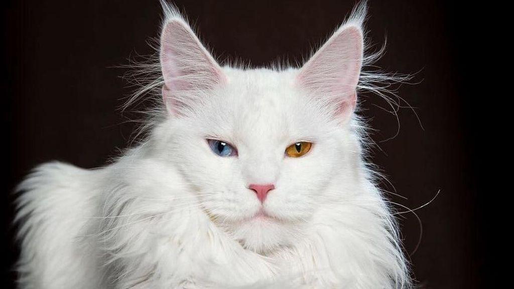 Terpesona Kecantikan Kucing dalam Bidikan Kamera