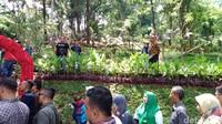 Di taman akan terdapat ratusan bunga anggrek dengan puluhan jenis dari berbagai daerah di Indonesia (Dadang Hermansyah/detikTravel)