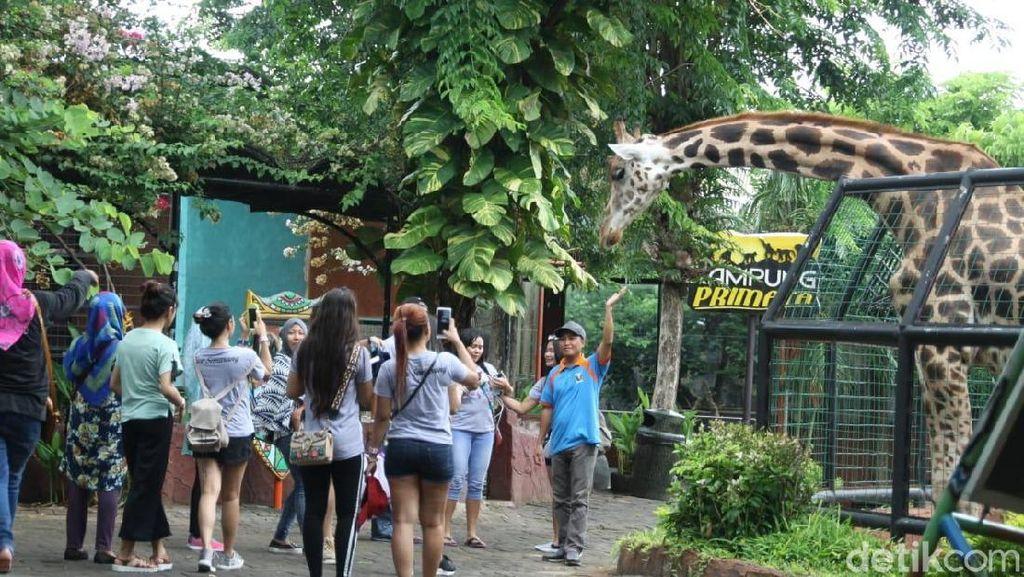 Foto: Asyiknya Libur Tahun Baruan di Maharani Zoo