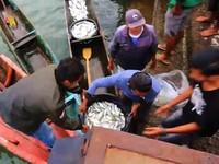 Pakai Lampu Ikan Buatan KKP, Nelayan Dapat Tangkapan 4 Kali Lipat