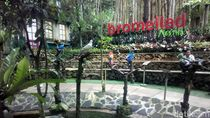 Main dengan Ribuan Burung di Lembang, Ini Tempatnya