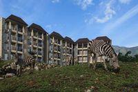 Baobab Safari Resort dikelilingi padang savana dengan aneka satwa