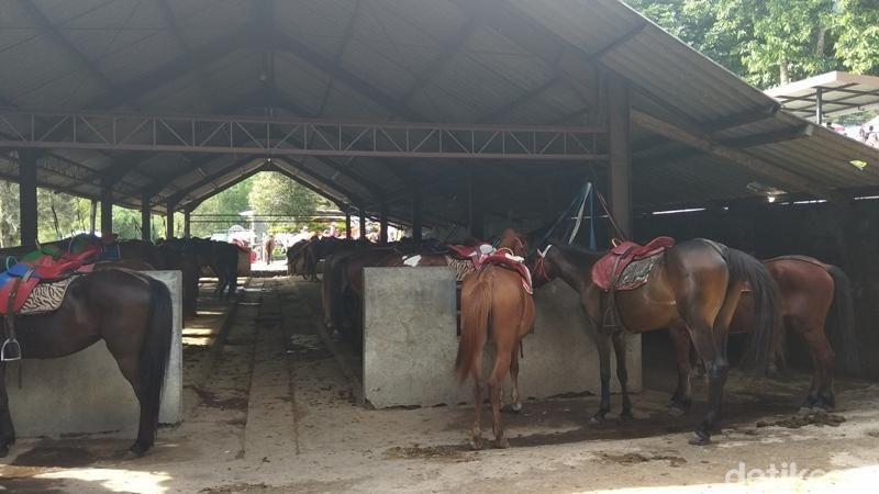 Animo wisatawan untuk berkunjung di Candi Gedong Songo, Bandungan, Kabupaten Semarang, Jawa Tengah, semakin tinggi. Selain menikmati pemandangan alamnya, kamu juga bisa naik kuda (Eko Susanto/detikTravel)