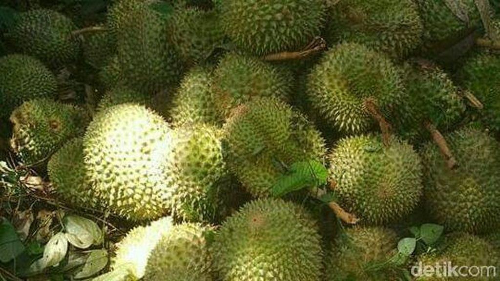 Sampah Kulit Durian Banjiri Singkawang, Petugas Kewalahan