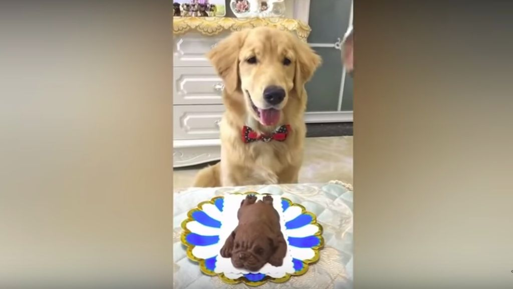 Ekspresi Anjing Ini Bikin Ngakak Ketika Pemiliknya Makan Cake Bentuk Anjing