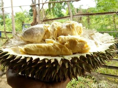 Foto: Durian Runtuh Paling Dicari dari Ogan Komering Ulu