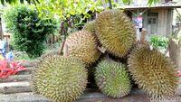 5 Kejadian Unik Hingga Seram yang Bikin Takut Gara-gara Durian
