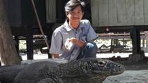 Liburan Murah Lihat Komodo Langsung di NTT