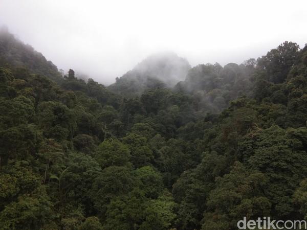 Pemandangan hutan hujan tropis seperti ini yang jadi sajian utama saat traveler melintasi jembatan gantung ini. Asri dan cantik bukan? (Idris/detikTravel)