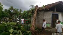 Hujan dan Angin Kencang Landa Bantul, Puluhan Pohon Tumbang