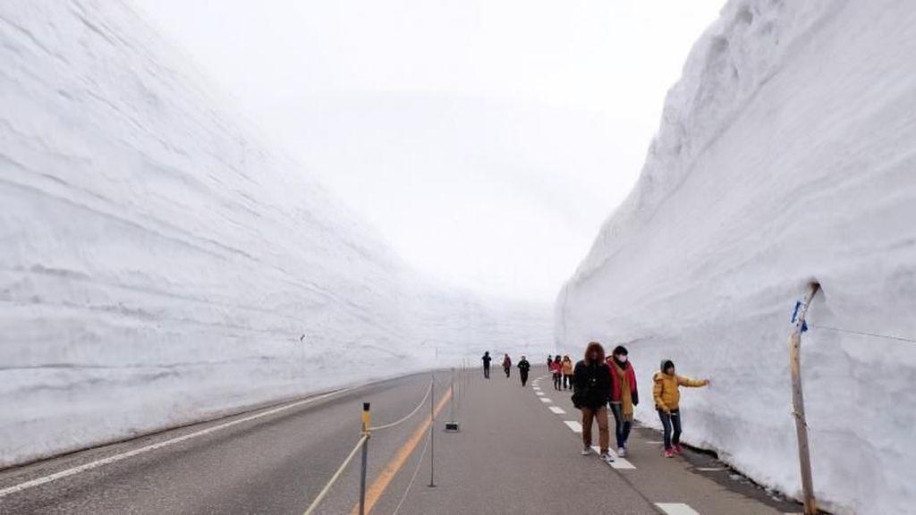 Foto: Cuma di Jepang, Ada Dinding Salju Setinggi 20 Meter!