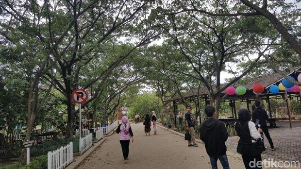Suasana di Taman Mangrove (Syanti/detikTravel)