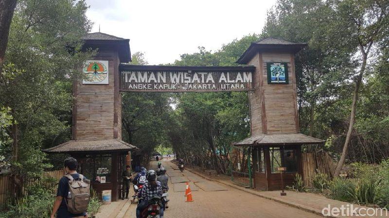 Foto Jakarta Punya Hutan Mangrove Seindah Ini