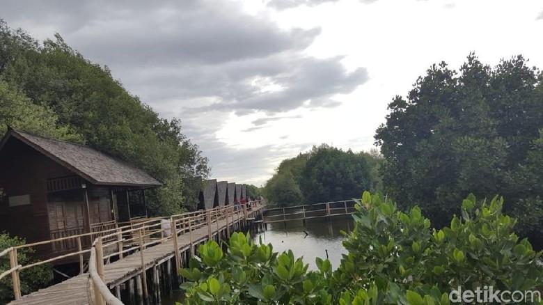 Taman Mangrove di Jakarta Utara (Syanti/detikTravel)