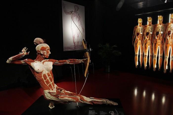 Ini adalah salah satu model peraga yang dipajang di Body Worlds. Pengunjung bisa melihat dan membayangkan otot apa yang bekerja saat seseorang memanah. (Foto: Michele Tantussi/Getty Images)
