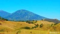 Bukan di Bromo, Ini Bukit Teletubbies Punya Bondowoso