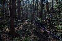 Suasana di hutan Aokigahara