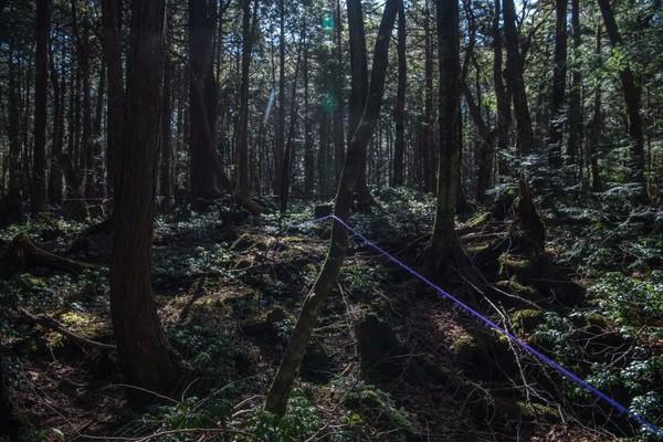 Pemerintah Jepang tidak tinggal diam. Sudah dari 10 tahun silam, pemerintah Jepang memasang rambu-rambu larangan bunuh diri, petugas hutan, sampai kamera pengawas di Aokigahara. Supaya mencegah, setidaknya mengurangi angka orang-orang yang bunuh diri di sana. (Carl Court/Getty Images)