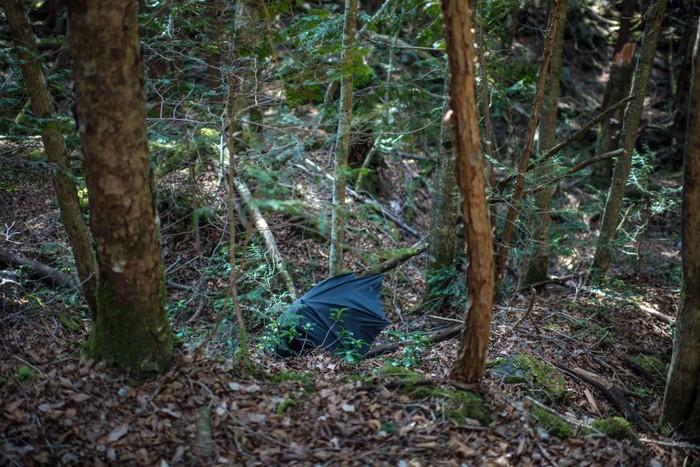 Hutan Aokigahara punya reputasi kelam sebagai salah satu tempat populer di dunia untuk bunuh diri. (Foto: Carl Court/Getty Images)