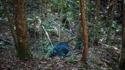 Tekanan sosial membuat warga Jepang rentan mengalami gangguan kejiwaan. Satu hutan bahkan terkenal karena banyak orang memilih mengakhiri hidupnya di sana.