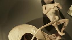 Dalam salah satu pameran Body Worlds, pengunjung bisa melihat bagaimana bayi dikandungan. Pameran ini menggunakan tubuh asli yang sudah diawetkan.