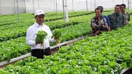 Mentan Lepas Ekspor Sayuran ke Singapura dan Brunei Darussalam