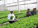 Kementan Siapkan Grand Design Hortikultura Demi Genjot Ekspor