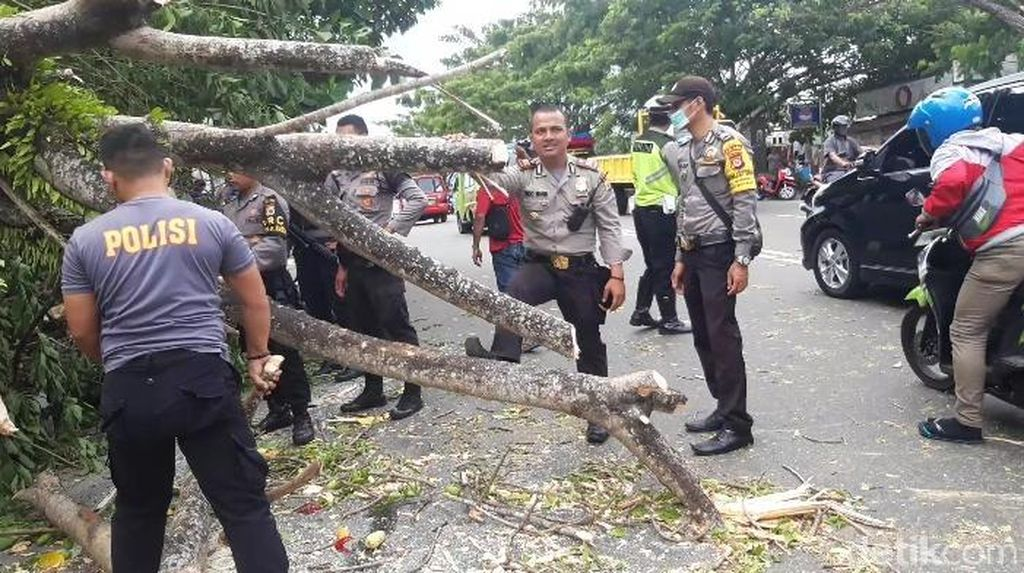 Angin Kencang Terjang Ambon, Pohon-pohon di Jalanan Tumbang